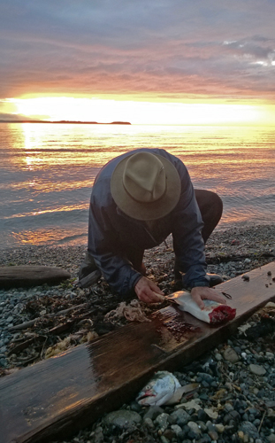 Filleting salmon on Admiralty Bay beach Coupeville Whidbey Island