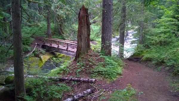 Stevens creek trail bridge over gorge in mount rainier for Indoor gardening rainier oregon