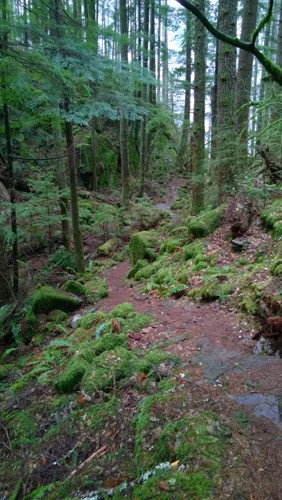 Boulder Garden Loop trail near North Bend 1
