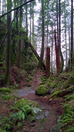 Boulder Garden Loop trail near North Bend 2