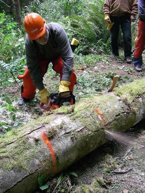 Cutting A Log : Game of logging tree felling yarding course