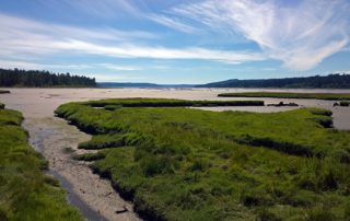 Theler Wetlands South Tidal Marsh Trail view to Hood Canal in Belfair