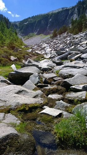 Boulder field along Bench and Snow Lake Trail in Mt Rainier National Park