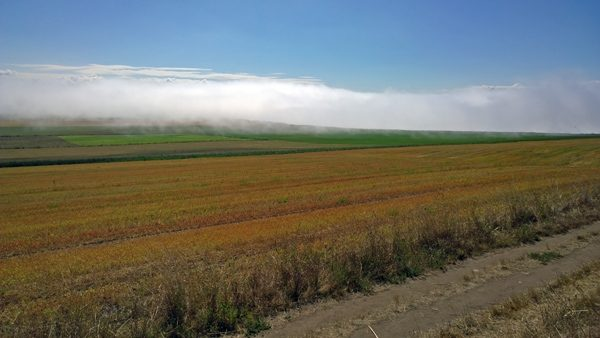 View from Ebey's Prairie Trail across farm land toward Ebey's Landing with low clouds
