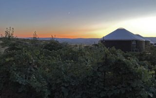Cave B Winery and Resort rental desert yurts in vineyards at sunset