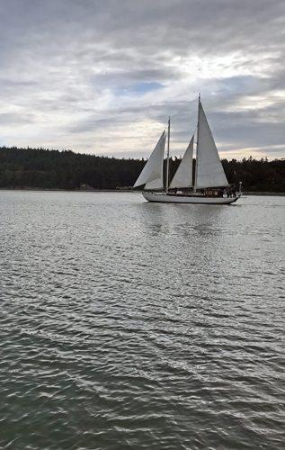 Suva sailing Coupeville Penn Cove