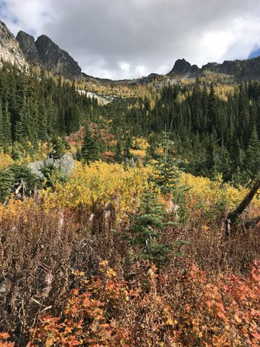 Golden larch yellow trees and fall color meadows along Blue Lake Trail in Okanogan National Forest Cascade Mountains